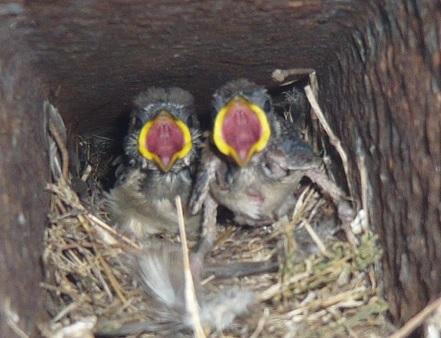 雀の兄弟UP